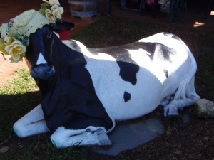 Cowaramup Fancy Cow