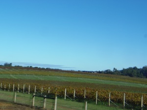 Donnelly River Vineyards