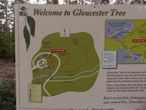 Gloucester Tree Sign