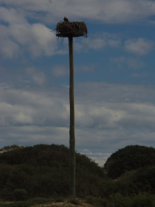 Osprey Artificial Nest